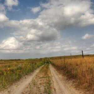 Sunflowers Make Nebraska Roads Beautiful