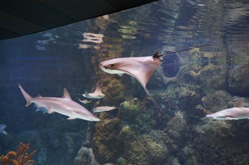 Henry Doorly Zoo Omaha Vacation Winner Announced Her