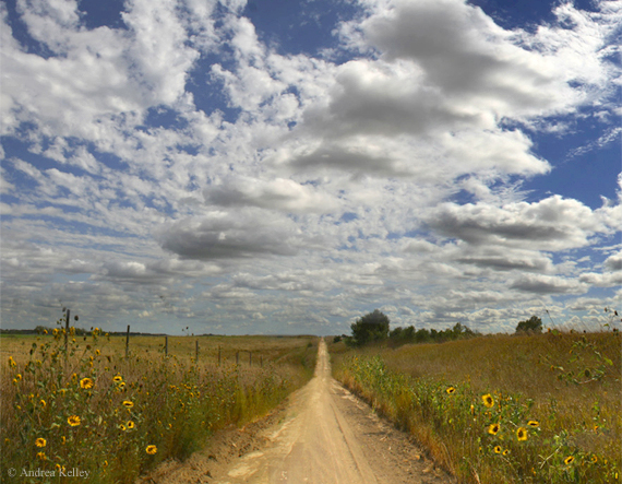 ©Andrea_Kelley_sunflower_road