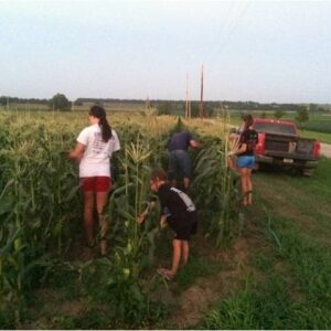 Sweet Corn Galore!!