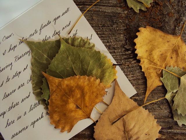 leaf insert birdseye