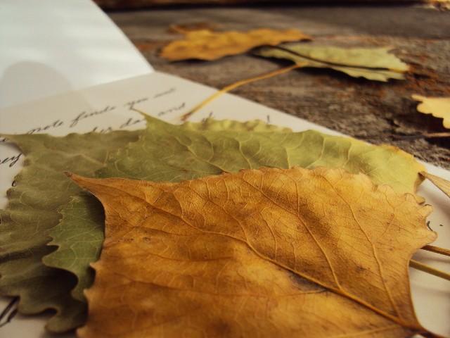 leaf insert closeup