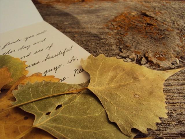 leaf insert closeup3