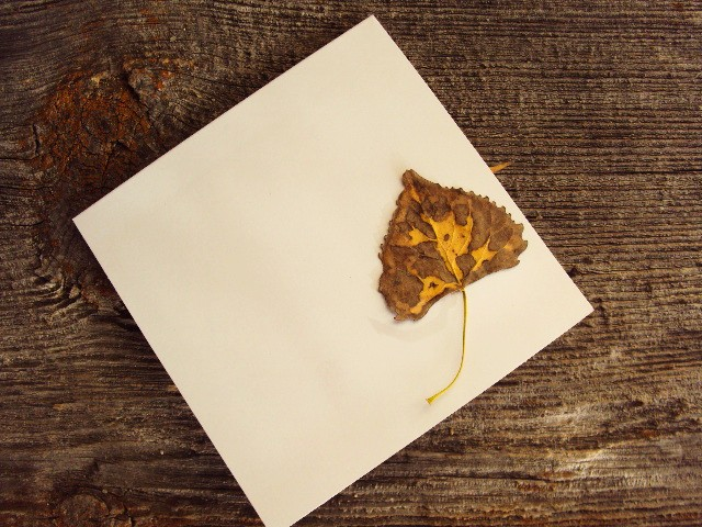 leaf notecard birdseye