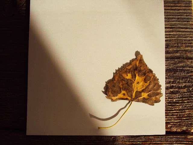 leaf notecard2