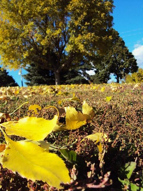 leaf tree2