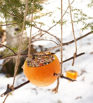 bird feeder orange