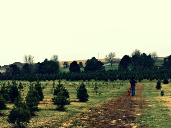 prior pines