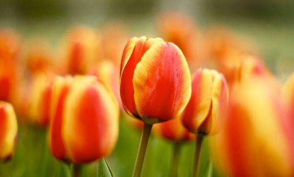 Nebraska spring