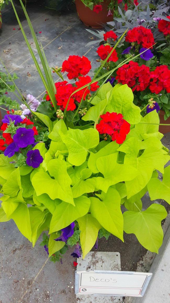 Steinbrink Landscaping & Greenhouses