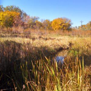 Reflections of Seasons