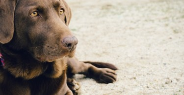 My dogs are more than just pets www.herviewfromhome.com