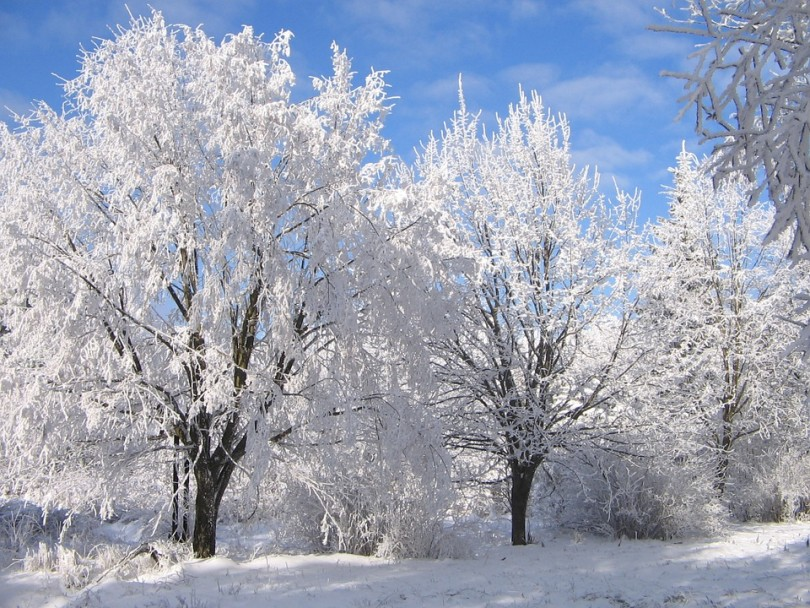 Feeling SAD from Old Man Winter? www.herviewfromhome.com