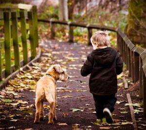 8 Reasons Every Family Should Get a Dog