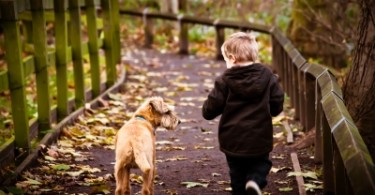 8 Reasons Every Family Should Get a Dog www.herviewfromhome.com