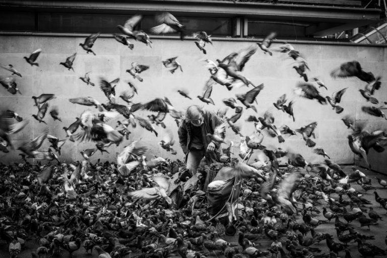 The Man and The Birds www.herviewfromhome.com