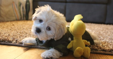 Adopting A Puppy Eased My Baby Hunger www.herviewfromhome.com