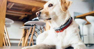 The Bitch that Saved My Marriage; Things I learned about marriage and loving my husband from my dog. www.herviewfromhome.com