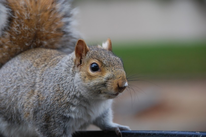 A Life Lesson Taught By Squirrels www.herviewfromhome.com