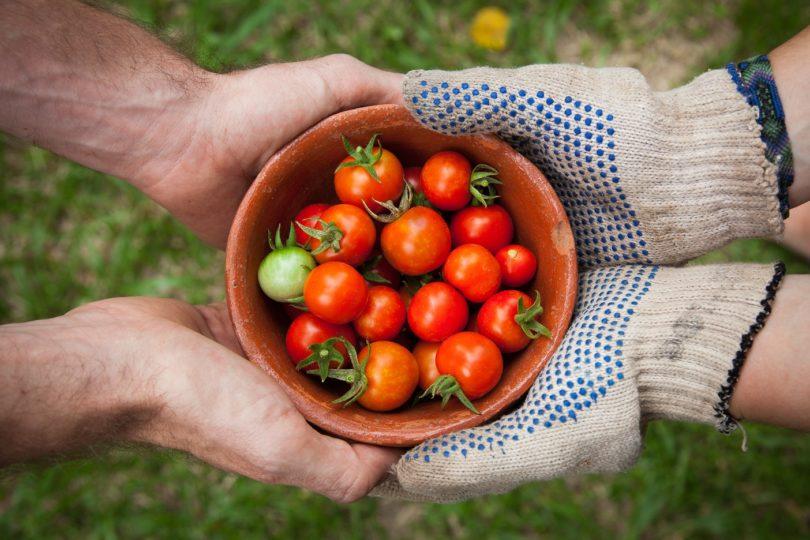 Life's Tomato Sauce (Plus an Amazing Sauce Recipe!) www.herviewfromhome.com