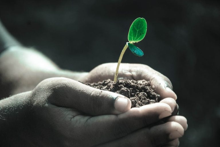 Gratitude for Growers www.herviewfromhome.com