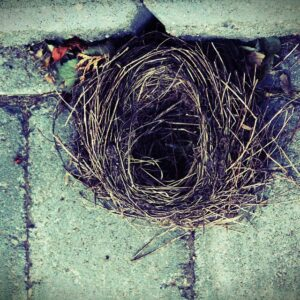 How to Survive Empty Nest: The Ultimate Oxymoron