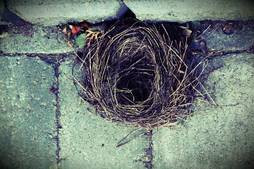 How to Survive Empty Nest: The Ultimate Oxymoron www.herviewfromhome.com