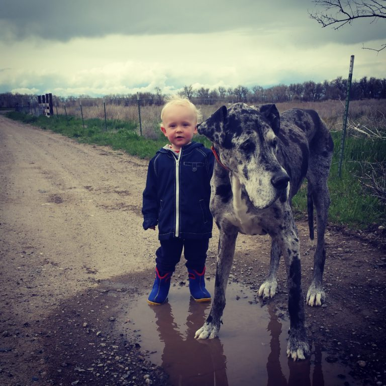 Here's Why Little Kids Need Big Dogs www.herviewfromhome.com