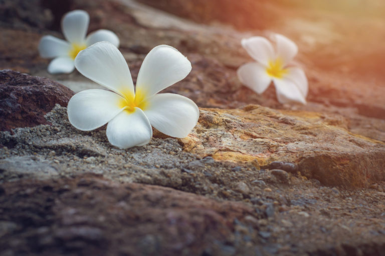What Moana Taught Me About Trauma www.herviewfromhome.com