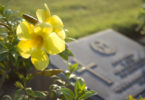 Finding the Humor in Grief www.herviewfromhome.com