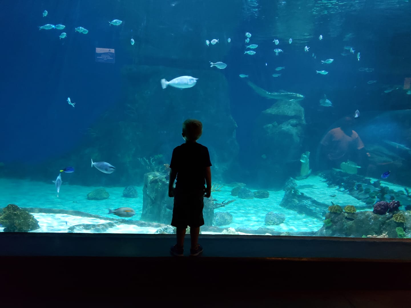 Silhouette of a child standing in front of a large aquariam