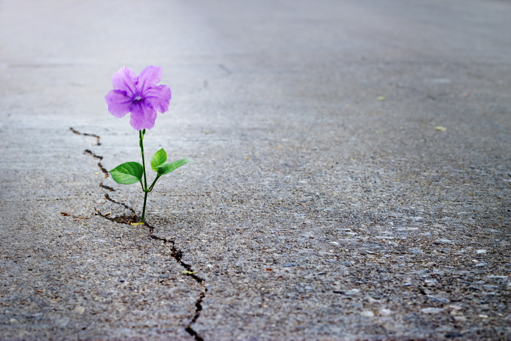 Flower growing out of cracked concrete