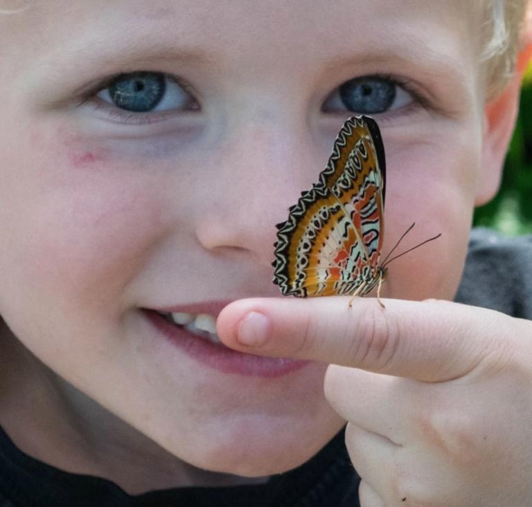 Little boy with butterfly on fingerr