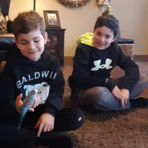 My Boys Wished For Birds—And It Was Just What We All Needed