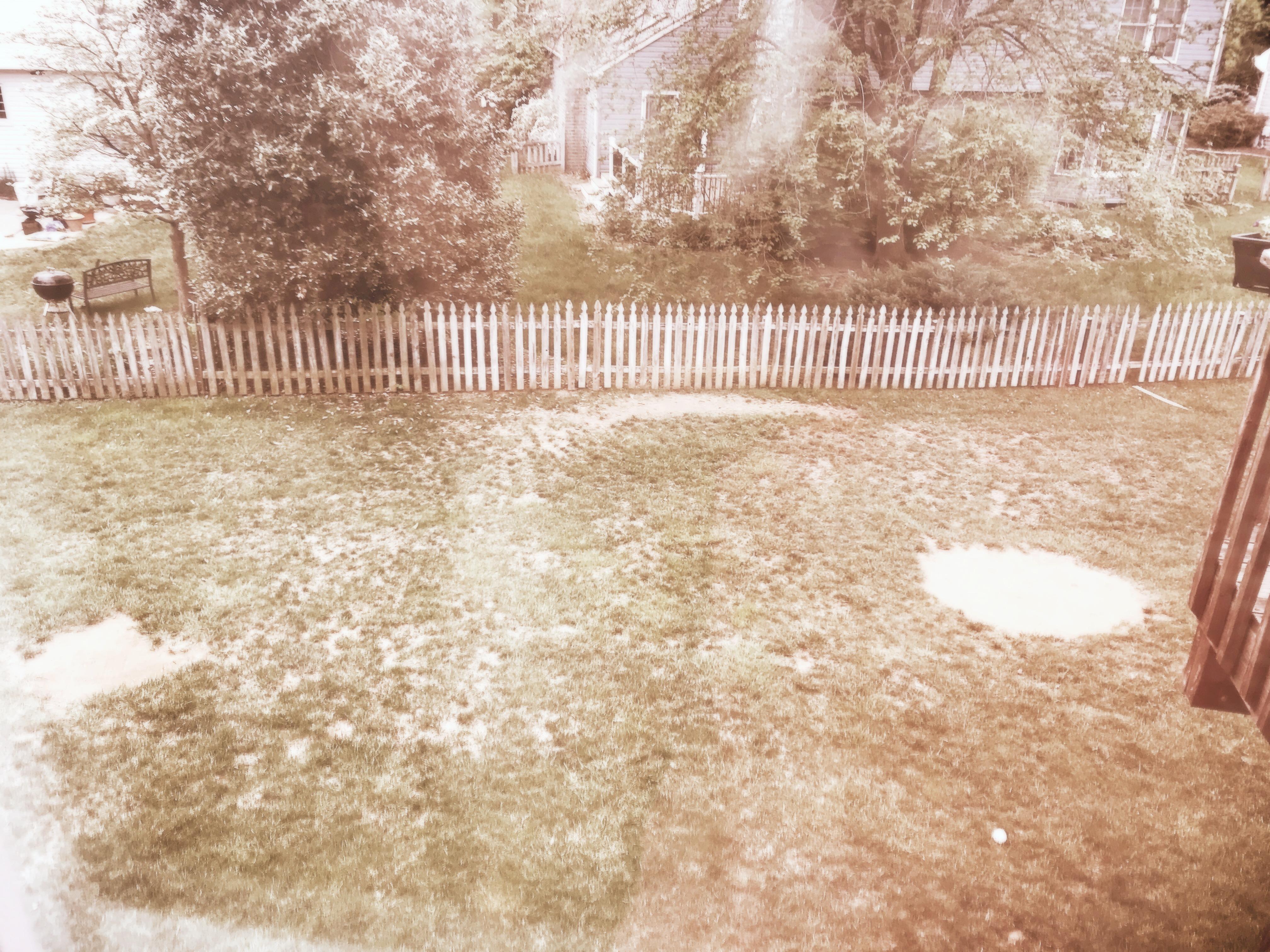 Backyard baseball lawn