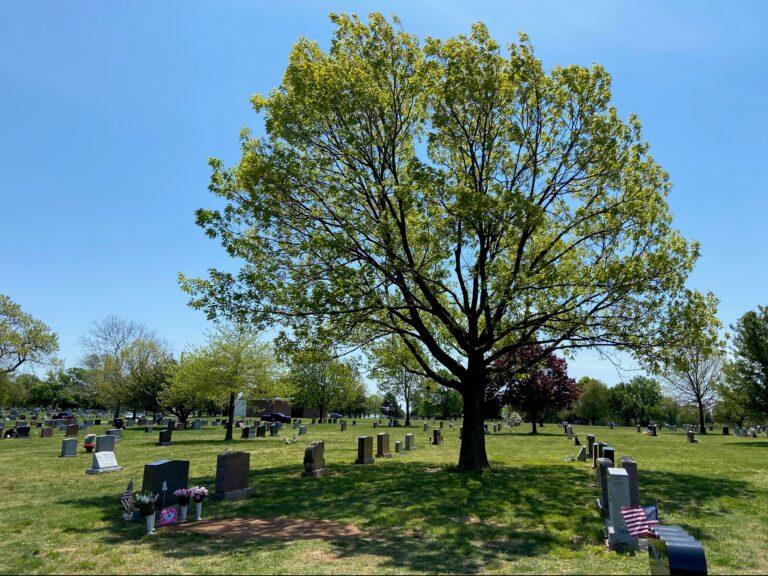 Graveyard on a sunny day