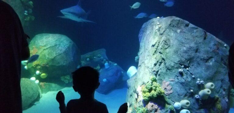 Back view of young boy looking at aquarium