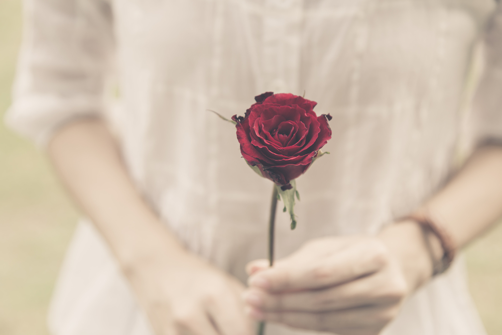 woman hands holding rose