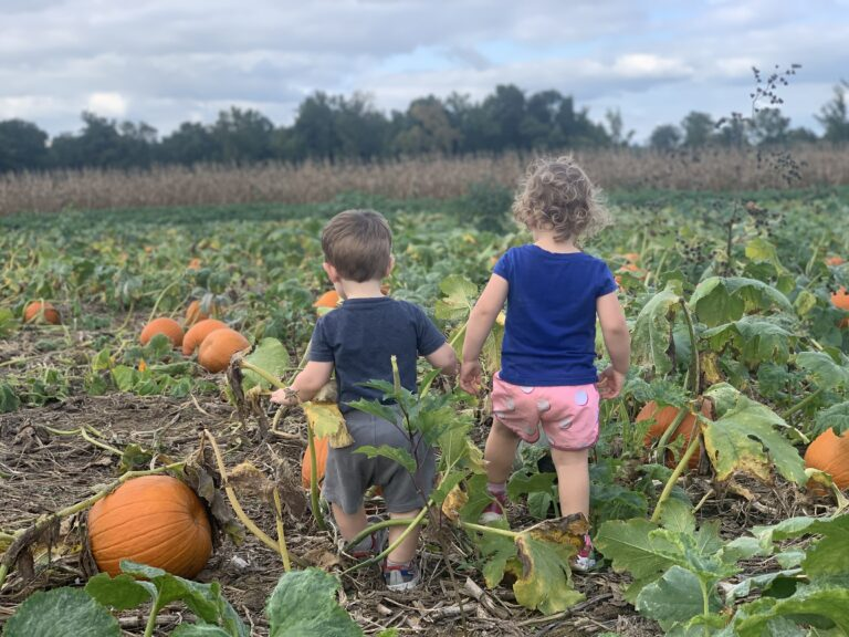 Toddlers walking through pumpkin patch, color photo