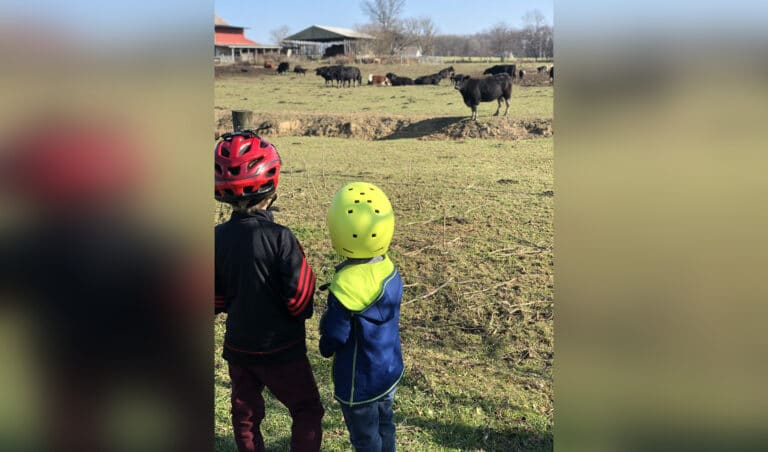 Brothers looking at field and cows